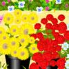 Flowershop -