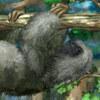 Super Sloth -